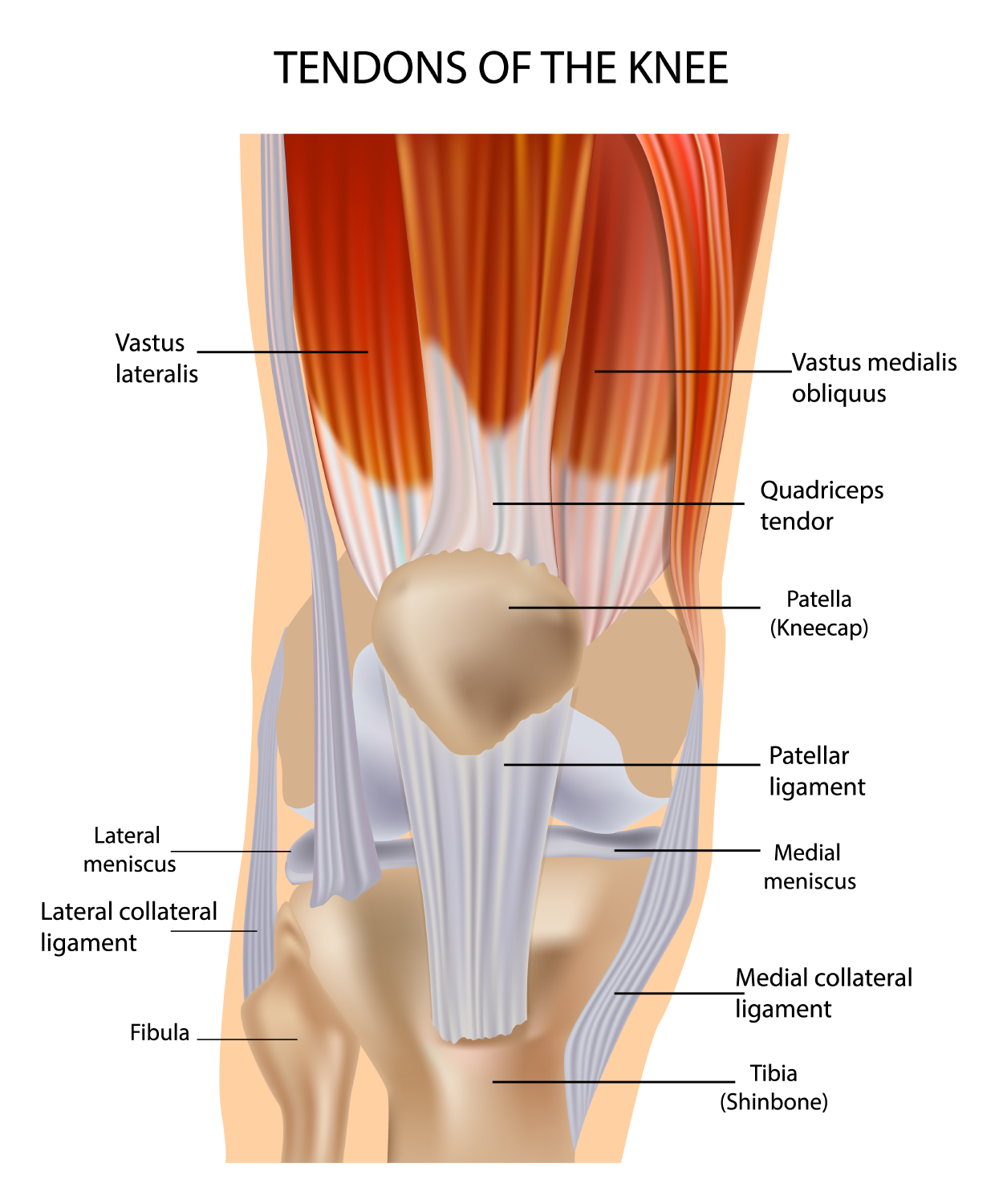 Knee muscle and tendon injuries